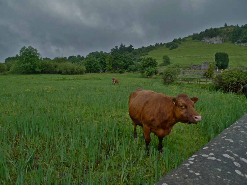 County Westmeath, Ireland. July 2012 Photo taken by Nathan Coben